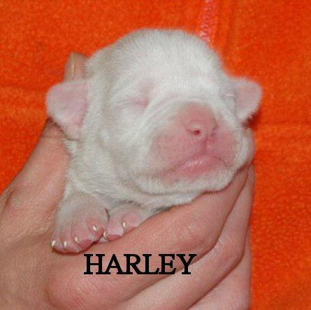 harley3.jpg