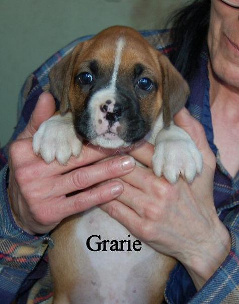grarie1.jpg
