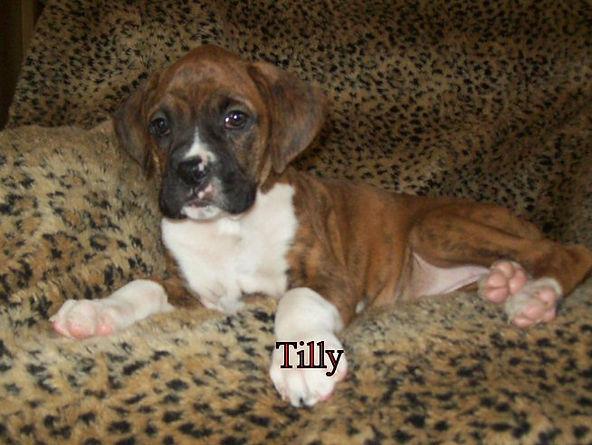 tilly1.jpg