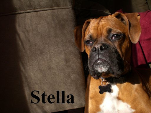 stella9.jpg
