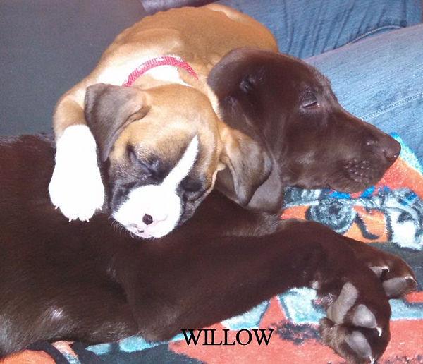 willow22.jpg