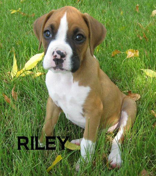 riley3.jpg