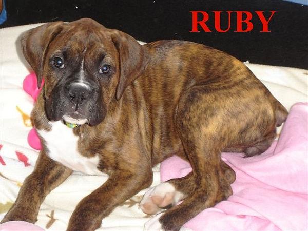 RUBYcan1.jpg