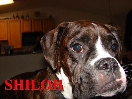Shiloh12.jpg
