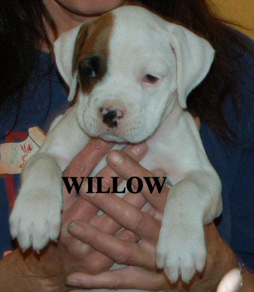 willow12.jpg