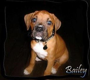 bailey3.jpg