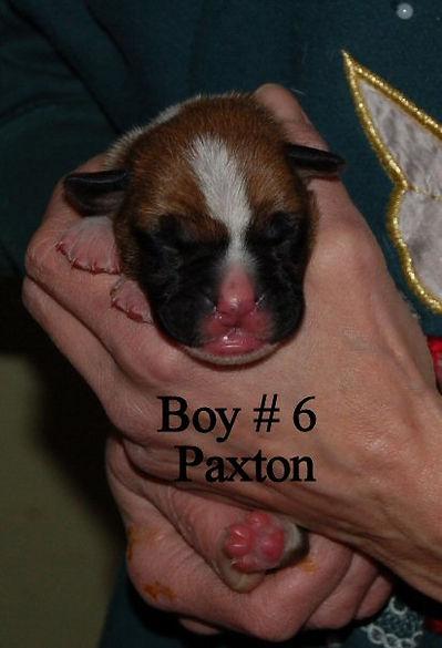 paxton1.jpg