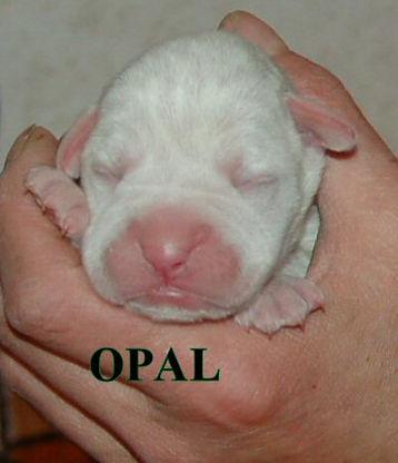 opal4.jpg