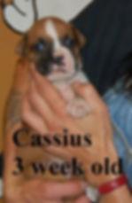 Cassius4.jpg