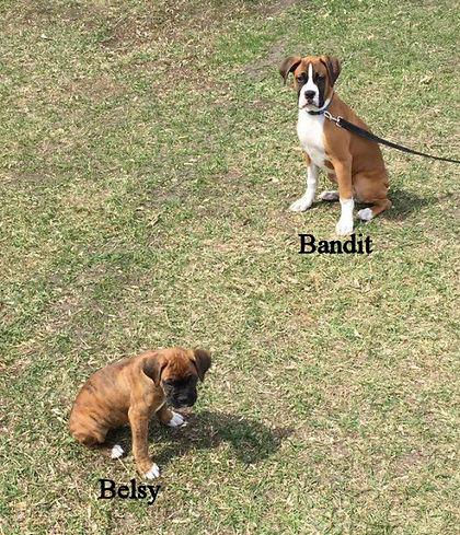 bandit6.jpg