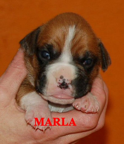 marla5.jpg