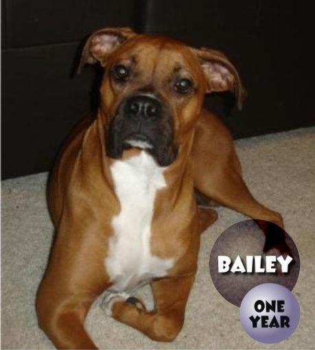 Bailey11.jpg