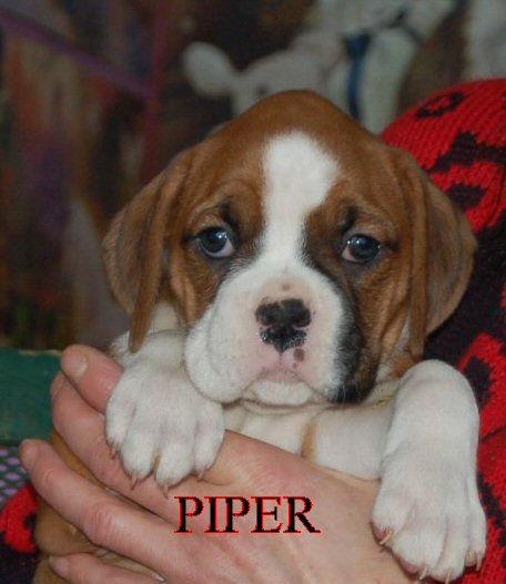 piper2.jpg