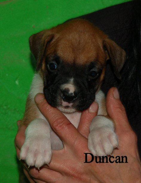 duncan1.jpg