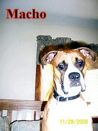 macho.jpg