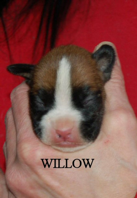 willow20.jpg