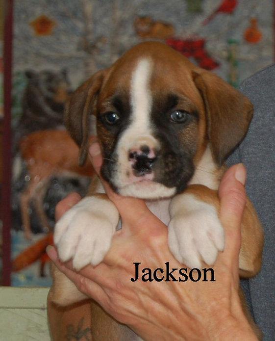 jackson1.jpg