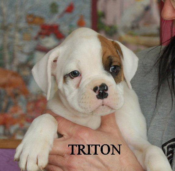 triton5.jpg