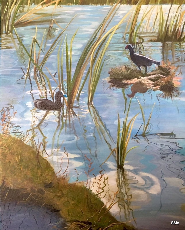 Pukeko nest and reflections