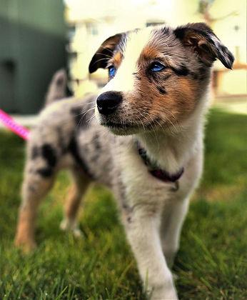 Puppies!!! #PuppyLove #WeLovePuppies #Pu