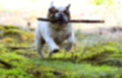 dog-2403747_1920.jpg