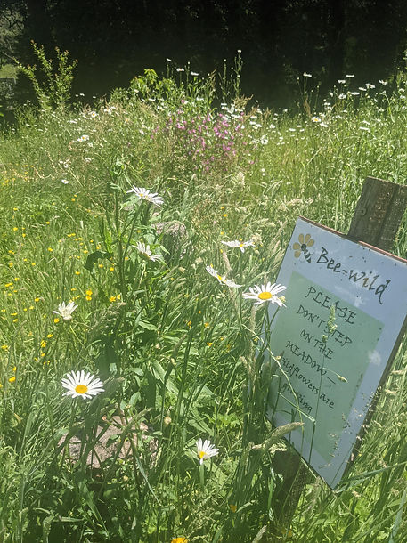 Yealmpton Stray Park meadow with sign closeup.jpg