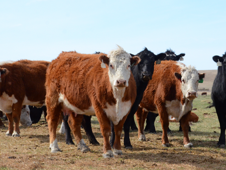 Nebraska floods may lead to an increase in beef price