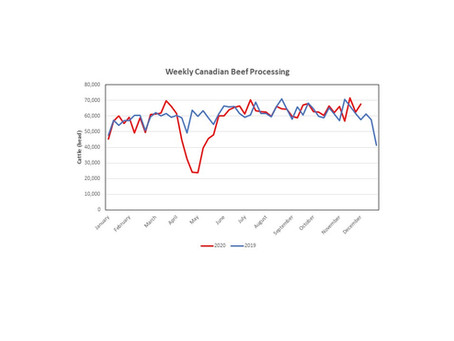 Revisiting Canadian Beef Processing: Is Everything Back to Normal?