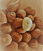 Malibar Chestnuts HMF 08212021.jpg