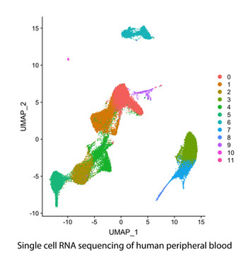 Single cell RNA sequencing of human peripheral blood