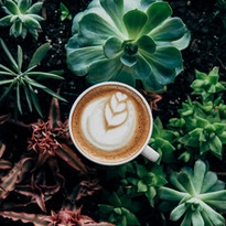 beautiful-botanical-coffee-374757.jpg