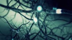 green-neuron-synapse-network-3d-animation-infinite-loop-inside-the-human-brain_rsahv9t8e_thumbnail-f