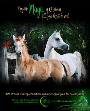 THE-PALMS-CHRISTMAS-2018.jpg