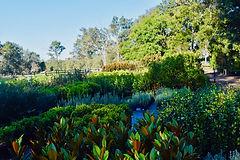 The Garden Nursery April 2021 (6).jpeg