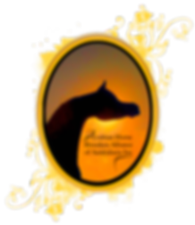 Arabian Horse Breeders Alliance of Australasi