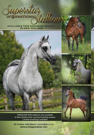 Privilege Stallions Kelly Mason.jpg