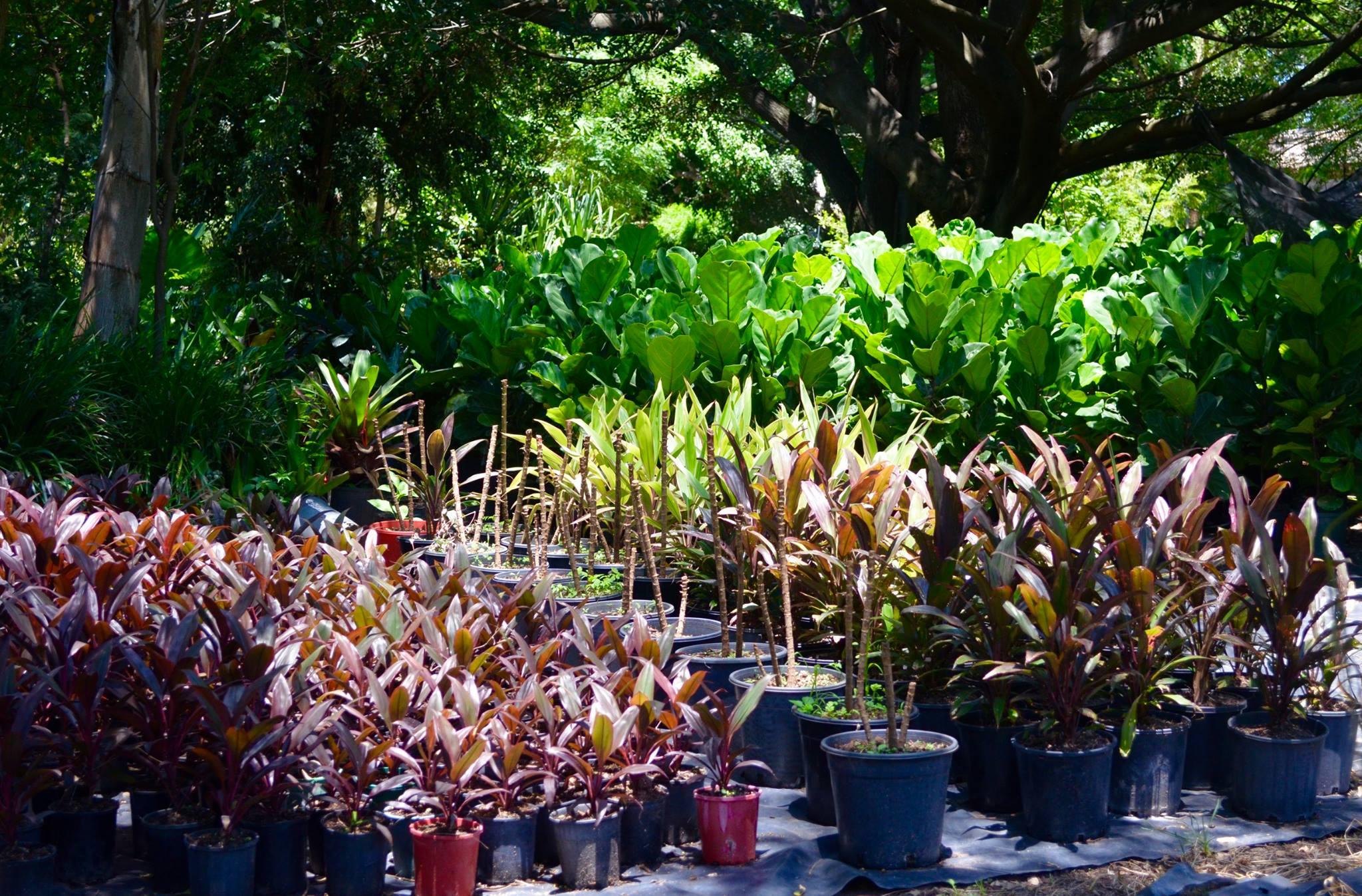 Various Plants