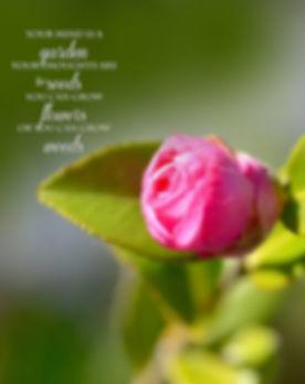 Greenery - The Garden Nursery