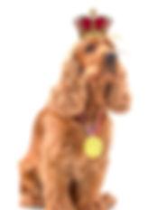 Private Label dog probiotics  Private Label dog supplements  private label dog treats
