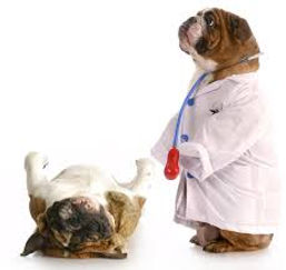 private label probiotic dog supplements