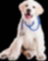 Private Label Dog Probiotics