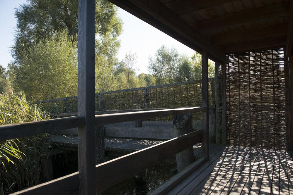 silberweide 2016-12