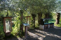 silberweide 2016-24