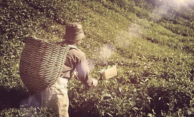 Profession-Photos-Farmer-min-p-1080x720.