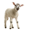 lamb%2520backwards_edited_edited.png