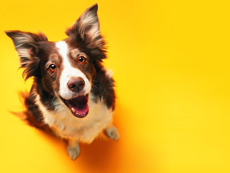 Nomes para cachorro - 500 ideias criativas. Inspire-se!