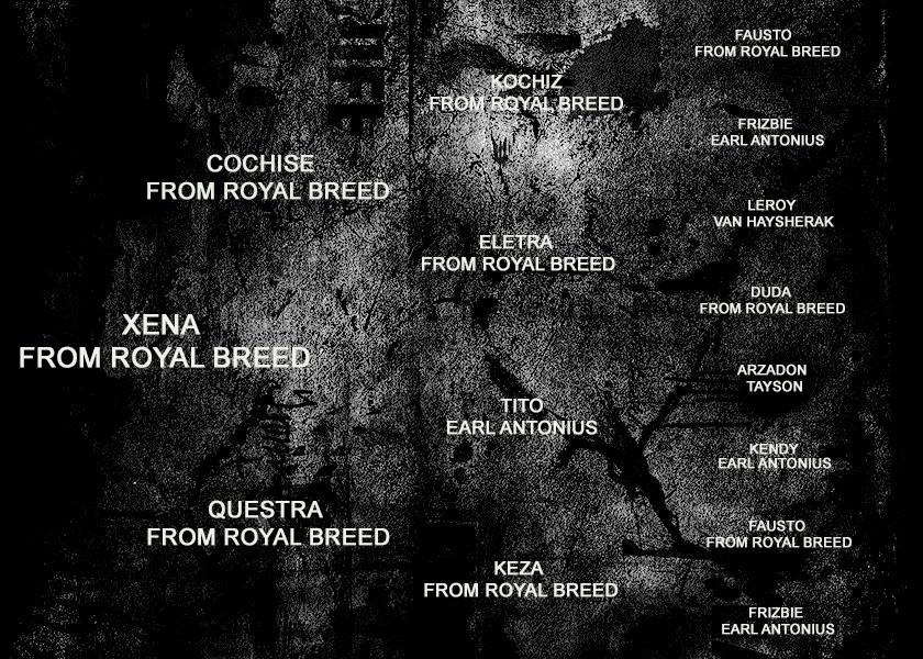 PEDIGREE - XENA FROM ROYAL BREED