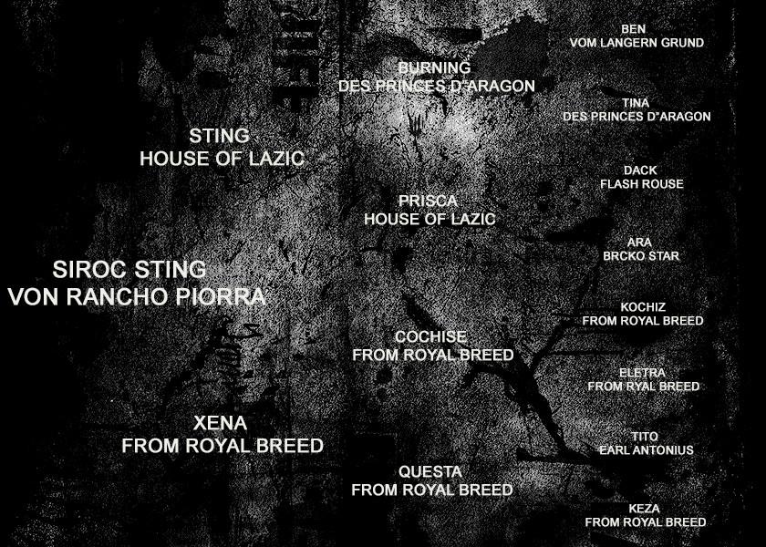 PEDIGREE - SIROC STING VON RANCHO PIORRA