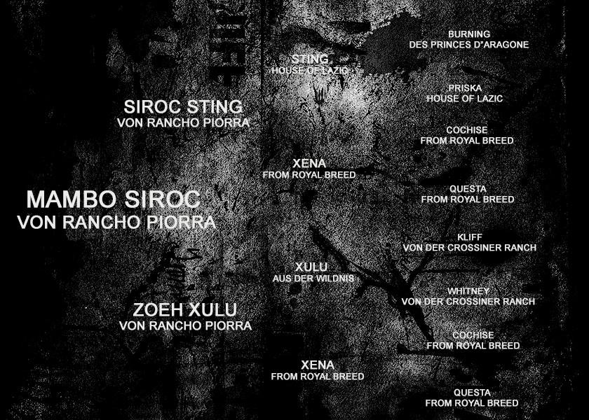 PEDIGREE - MAMBO SIROC VON RANCHO PIORRA