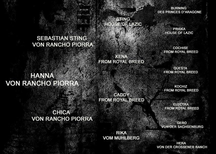 PEDIGREE - HANNA VONRANCHO PIORRA